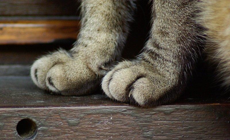 Złamana łapa u kota