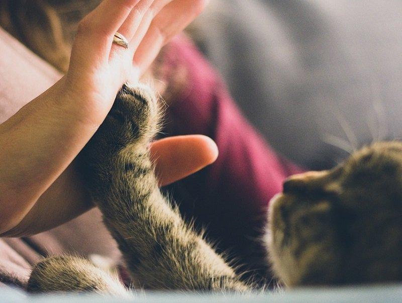Kocia łapa na dłoni kobiety